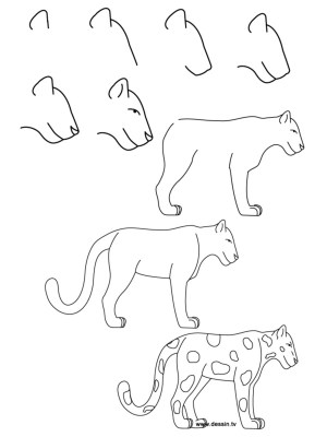 draw easy animals step guide guides
