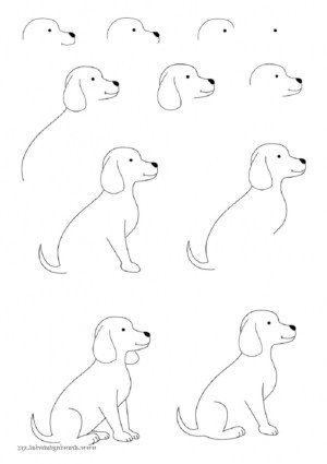 draw easy animals step animal drawing basic simple steps guide