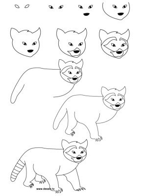 draw easy animals drawing step racoon simple drawings steps cool thedrawbot animal becoming manner lead too pretty
