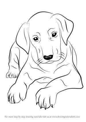 dog drawing simple practice follow head