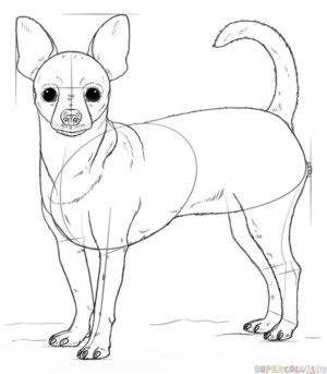 dog drawing draw simple chihuahua drawings step follow practice easy puppy realistic tutorials doodle animal dogs learn beginners supercoloring pets