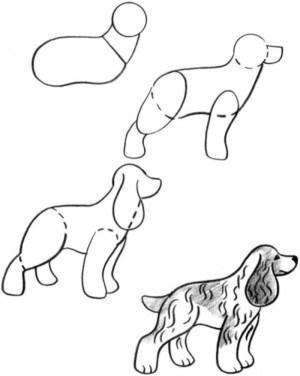dog drawing simple practice follow drawings breed