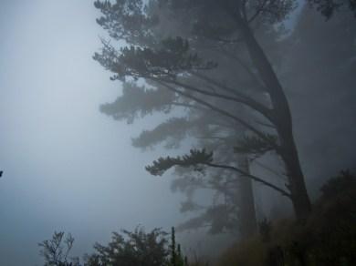 Trees on Hawk Hill