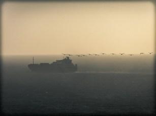 A Ship and Seabirds