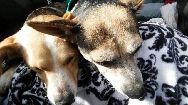 Facebook/ 100+ Abandoned dogs of Everglades Florida