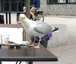 Ikke bare Borgemusikere som spiser lunsj på Verdensspeilet