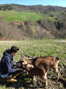Fede with goats