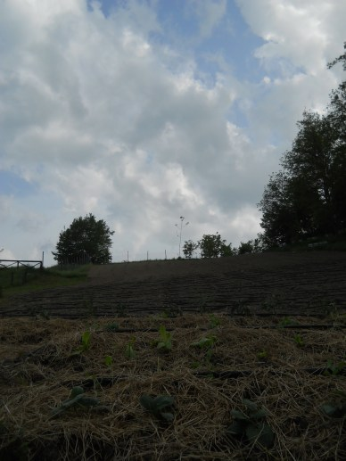 We planted the May Pole at the top of the field. See it on the horizon?