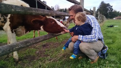 Evan and wee lad with Cow
