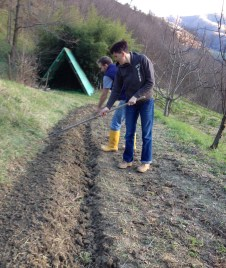 Step 6: Prepare and rake out seed bed