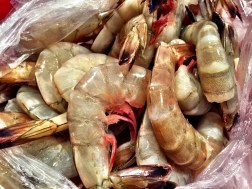 Salty Catch Seafood Shrimp