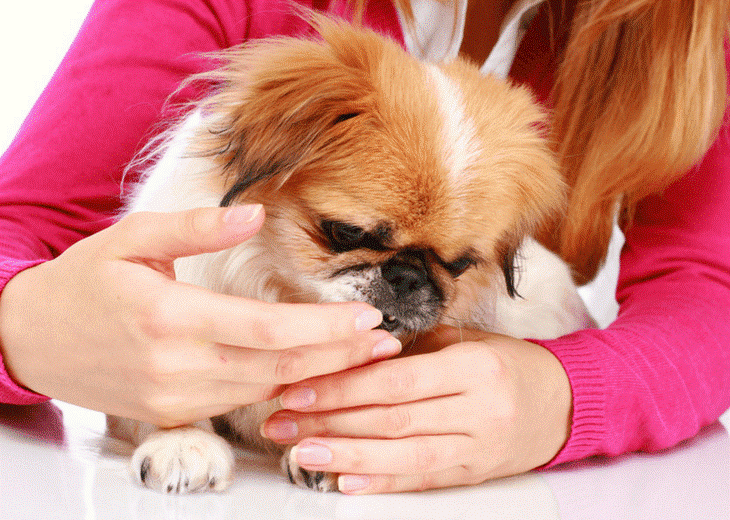 Easiest Ways to Administer CBD Oil for Pets