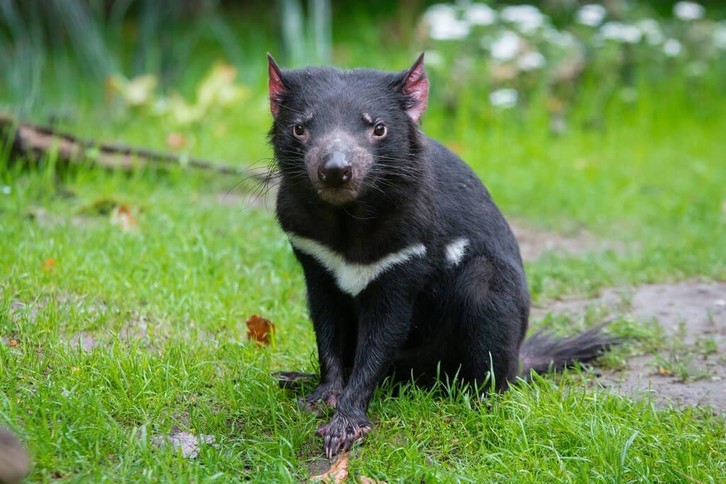 crowdfunding campaign brings tasmanian