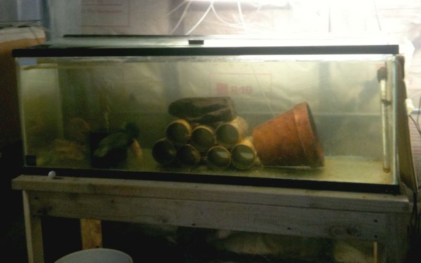 Tilapia Breading Tank