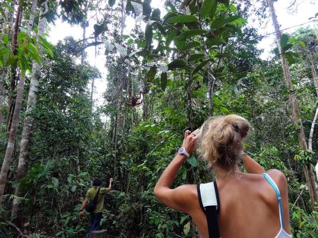 Semenggoh Orangutan & Annah Rais Bidayuh Longhouse