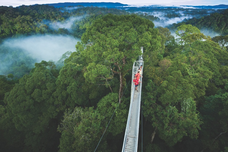 Trip Notes : canopy walkway samoa - memphite.com