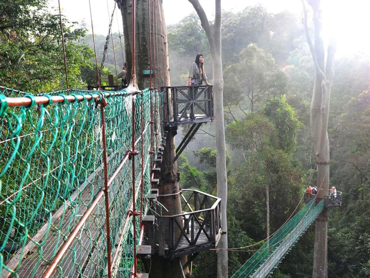 Canopy walkway at Danum Valley, Sabah, Malaysia