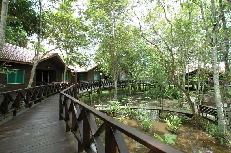 Elevated Chalets accessed via a boardwalk at Kinabatangan River Lodge, Sabah, Malaysia.