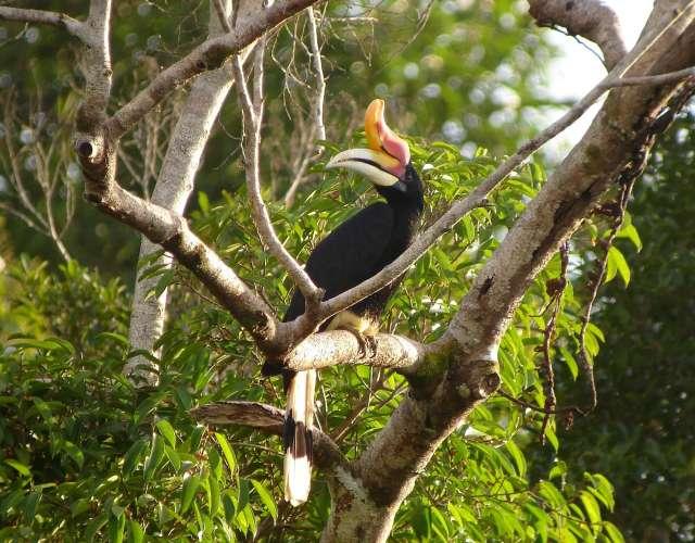 Tabin Wildlife Reserve 4D3N