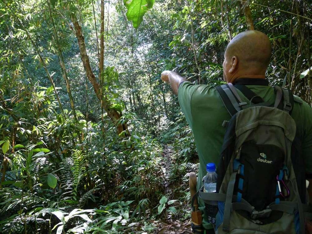 Bird watching in Borneo