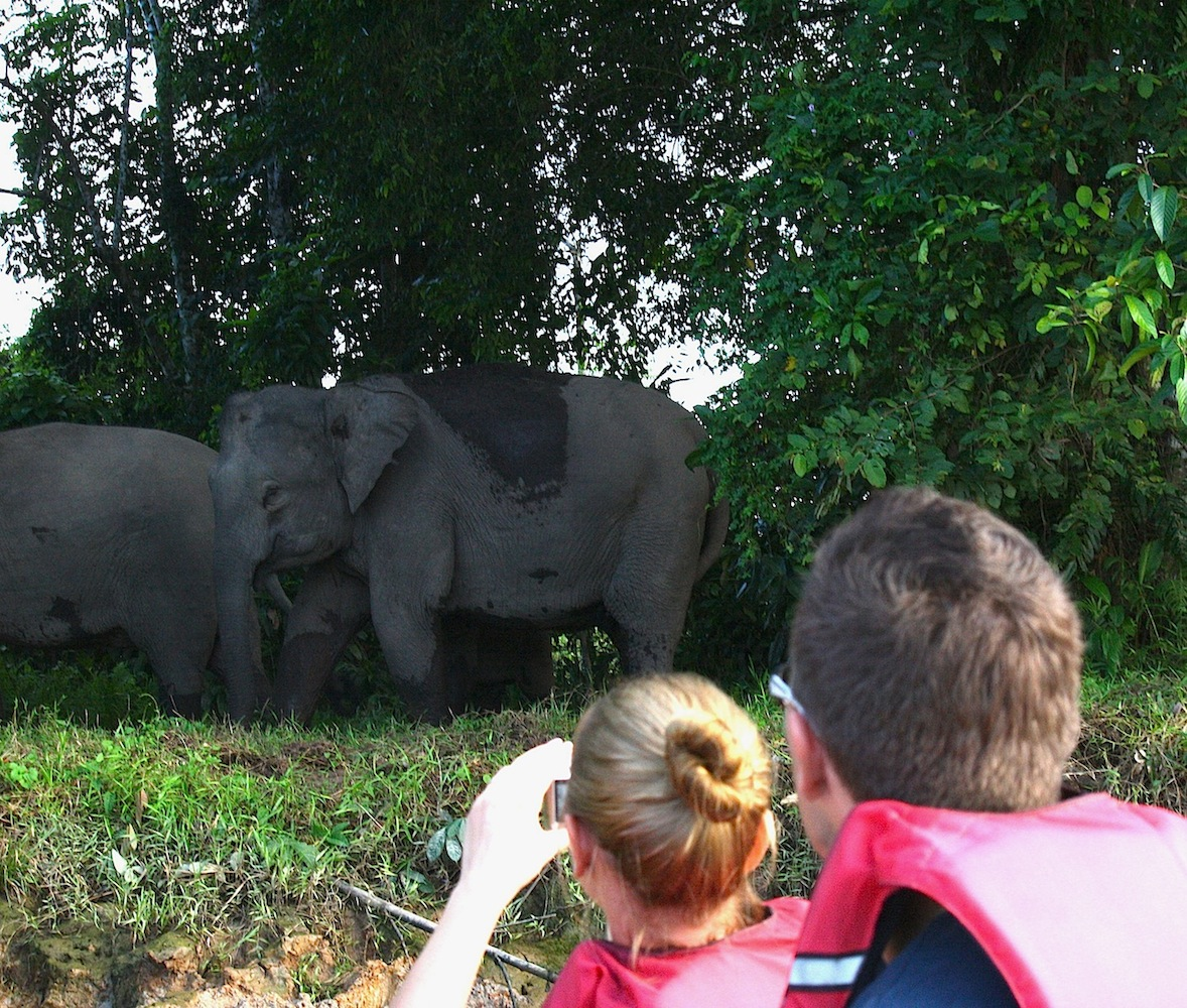 Elephant watching in Sabah