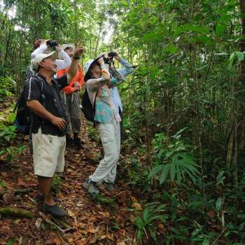 Tours for single travellers in Borneo