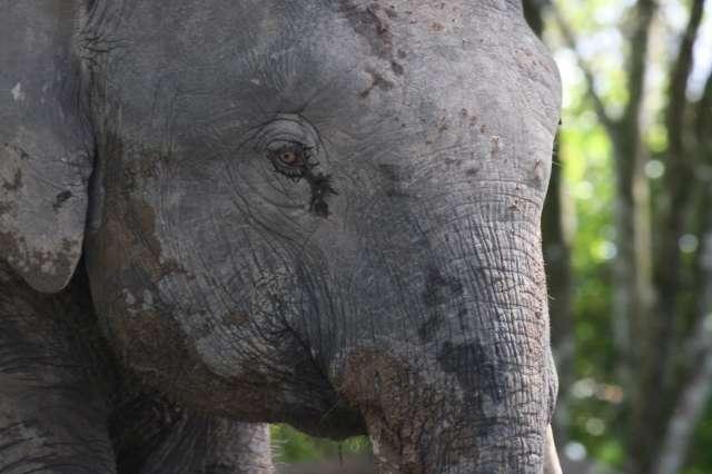Deramakot Forest Reserve 4D3N