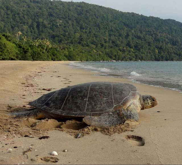 Sarawak Wildlife Watch 8D7N