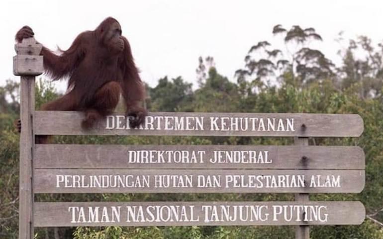 taman nasional tanjung puting