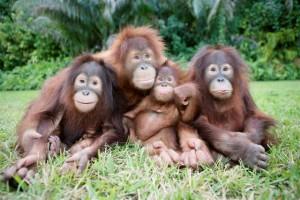 4happy_monks