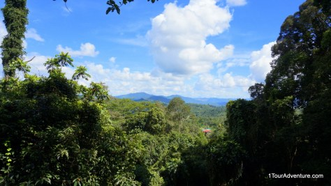 Scenic view from the canopy walkway