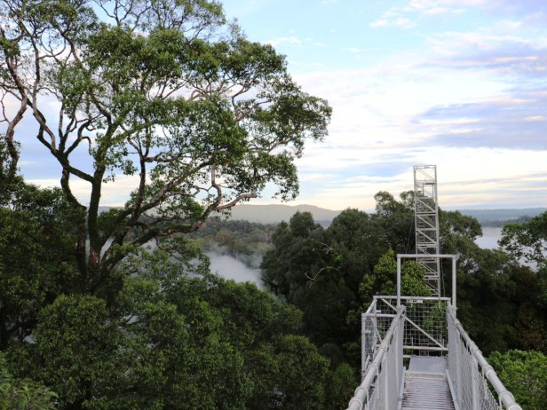 canopy-walkway-3p7a3439