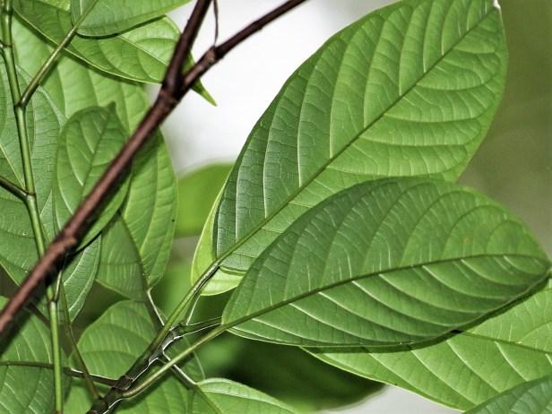 leaves-3p7a6668-copy