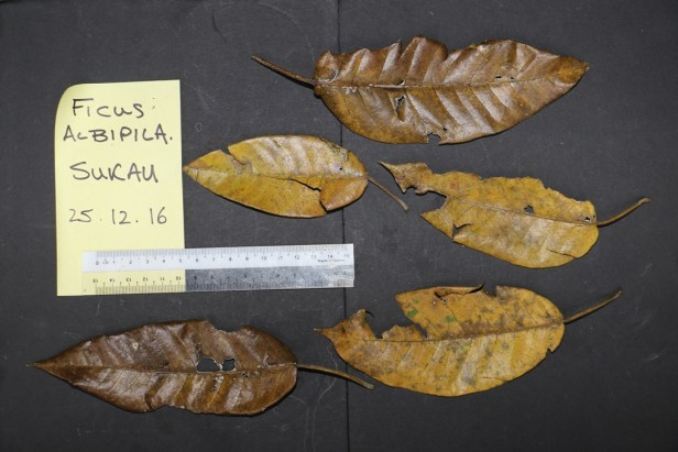 old-leaves-3p7a8878