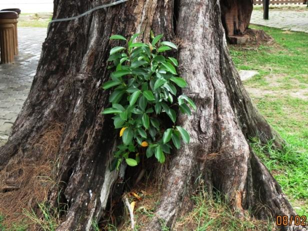 young-tree-img_2258