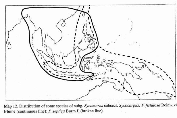 Ficus septica distributin map.jpg
