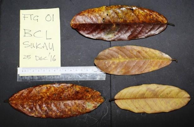 02 Magnoliifolia 3P7A8871 - Copy.JPG