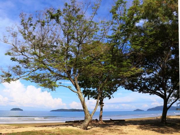 Ficus drupaceae 3Y3A2782.JPG