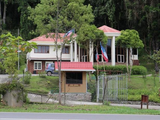 Ficus gul Crocker Range Park HQ IMG_0062
