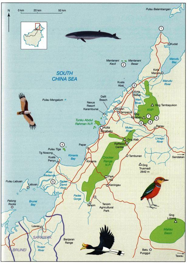 Ficus gul Map NW Borneo .jpg