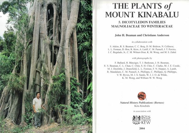 Ficus kerkhovenii by Tony Lamb.jpg