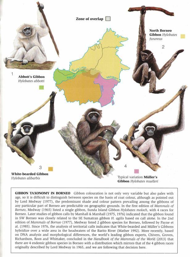 Gibbons of Borneo.jpg