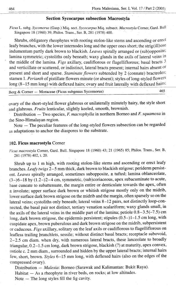 Berg (2005)  Section Sycocarpus subsection Macrostylla.jpg