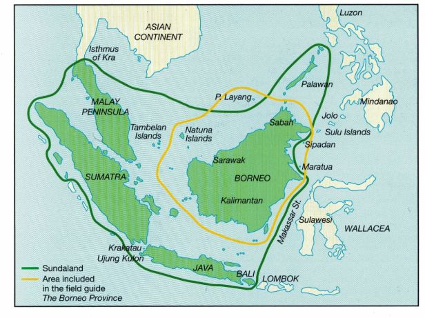 Sundaland & the Borneo Province