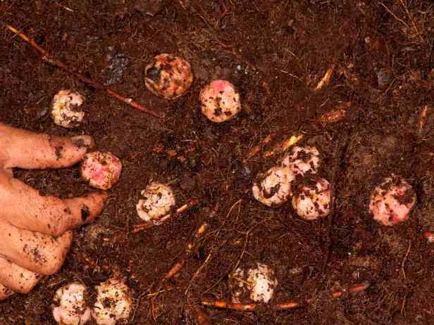 06 110221 Ficus megaleia - 3.jpg
