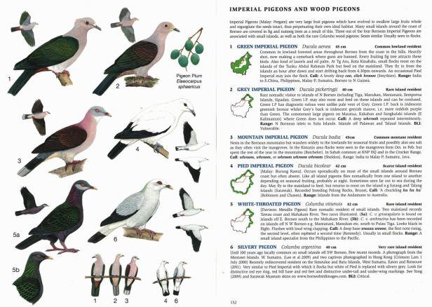 0004 04b Imperial Pigeons Full DPS - Copy.jpg