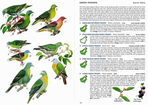 02b Green Pigeons Full DPS.jpg