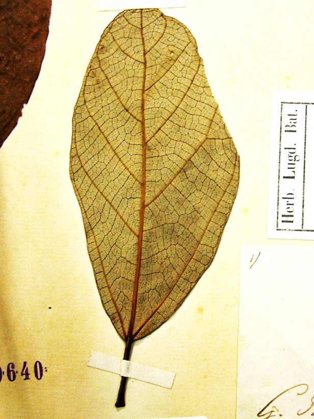 Copy of L0729132_LABEL.jpg