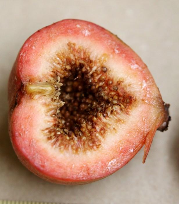 08 Ficus racemosa 0C7A5823.JPG