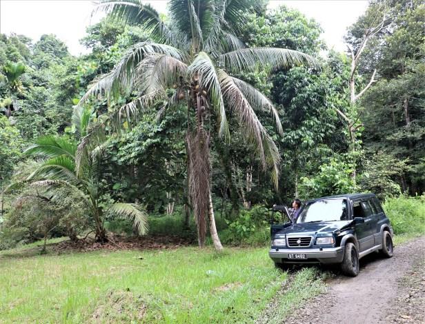 09 Jungle Dave IMG_1097.JPG